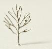Listnatý strom cínová slitina v =  25